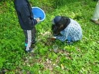 昆虫生息調査