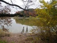 紅葉の荒池