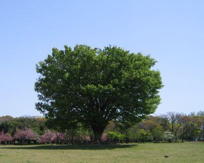 巨木の写真