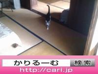 2016/09/11(10:04:40) 猫S写真 民家屋内