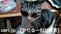 2018/12/05 猫スズ(すず)写真 KIMG0241