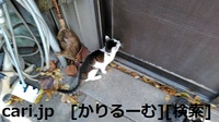 2018/12/09 猫ハナ(はな)写真 KIMG0253