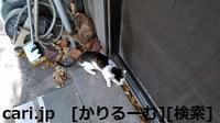 2018/12/09 猫ハナ(はな)写真 KIMG0254