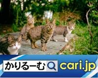 人と猫との穏やかな暮らしの為に地域猫活動に尽力する住人