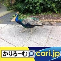 初詣は、アニメ・ゲーム・人気キャラの聖地で参拝!