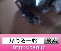 2016/09/25(12:54:45)写真 猫S