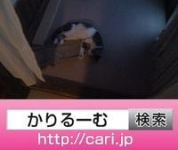 2016/09/27(17:42:10)写真 猫S