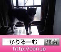 2016/09/30(12:24:24)写真 猫S