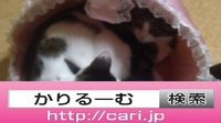 2016/10/31(18:12:11) 写真 猫H・S