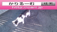 2016/11/04(15:25:01)写真 猫H
