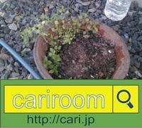2016/12/28(14:16:58)植物 写真