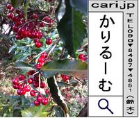 2012/02/16(12:22)撮影写真 赤い実の植物