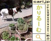 2012/03/19 撮影写真 犬M