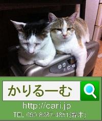 2012/01/03撮影写真 猫H・Y