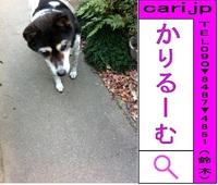 2012/01/14(16:21)撮影写真 犬M