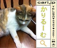 2012/05/17(19:58)撮影写真 猫Y