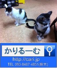2013/04/09(08:16)撮影写真 猫H・S