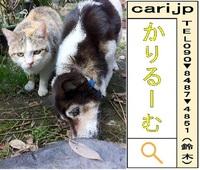 2012/03/13(09:54)撮影写真 猫Y・犬M