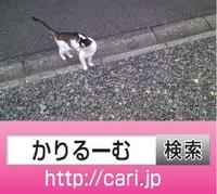 2016/10/13 猫H写真