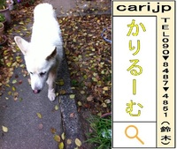 2011/12/07(08:53)撮影写真 白犬S