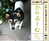 2011年08月10日(10時23分)A撮影写真 犬M
