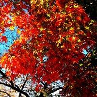 名古屋の紅葉 緑区・戸笠池