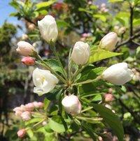 19年4月16日の庭の花たち