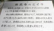 2016年11月日帰りドライブ 10 横蔵寺5