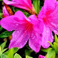 4月13日 火曜日 パラパラ雨 湿ったちょいと強い風 分解