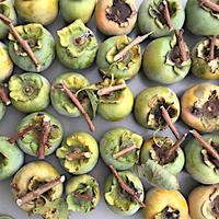 青い柿の収穫 それをどうやって食べる??? 実験