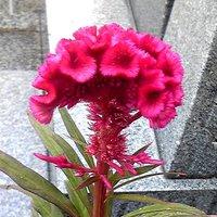 平成最後の墓参り と 昼飯