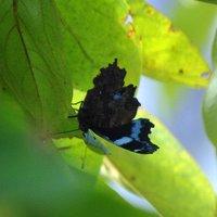 黒い蝶が飛んでたけど・・・・