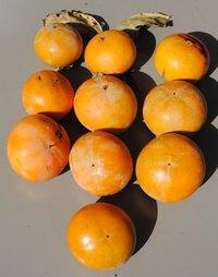 今年の柿の収穫 第1弾