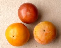 監視されている・・・・(今年の柿の収穫 第3弾)