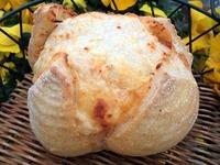 グレープフルーツ酵母チーズぱん&チョコベーグル