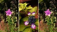 梅雨時期に」咲く花
